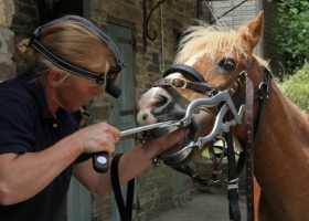 Horse dentist in Devon