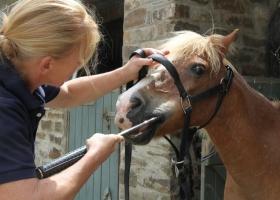 Pony aged 30+